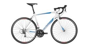 Bergamont Prime 4.0 von Fahrrad & Meer, 25335 Elmshorn